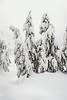 Yellowstone Snow Sculptures