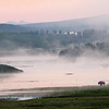 View of a foggy evening scene in Yellowstone.