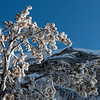 Frosted Tree at Mammoth, Yellowstone by David Sparks January 2019