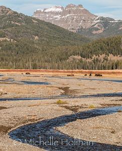 Bison on Soda Butte Creek