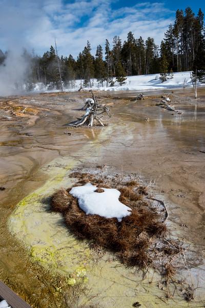 JForrest-Yellowstone-3