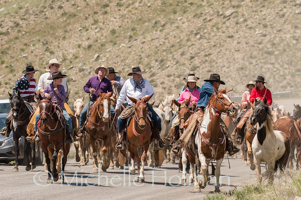 Gardiner, Montana - May 26, 2018- Cowboys drive horses through Gardiner for the Hells-a-roarin Horse Drive.