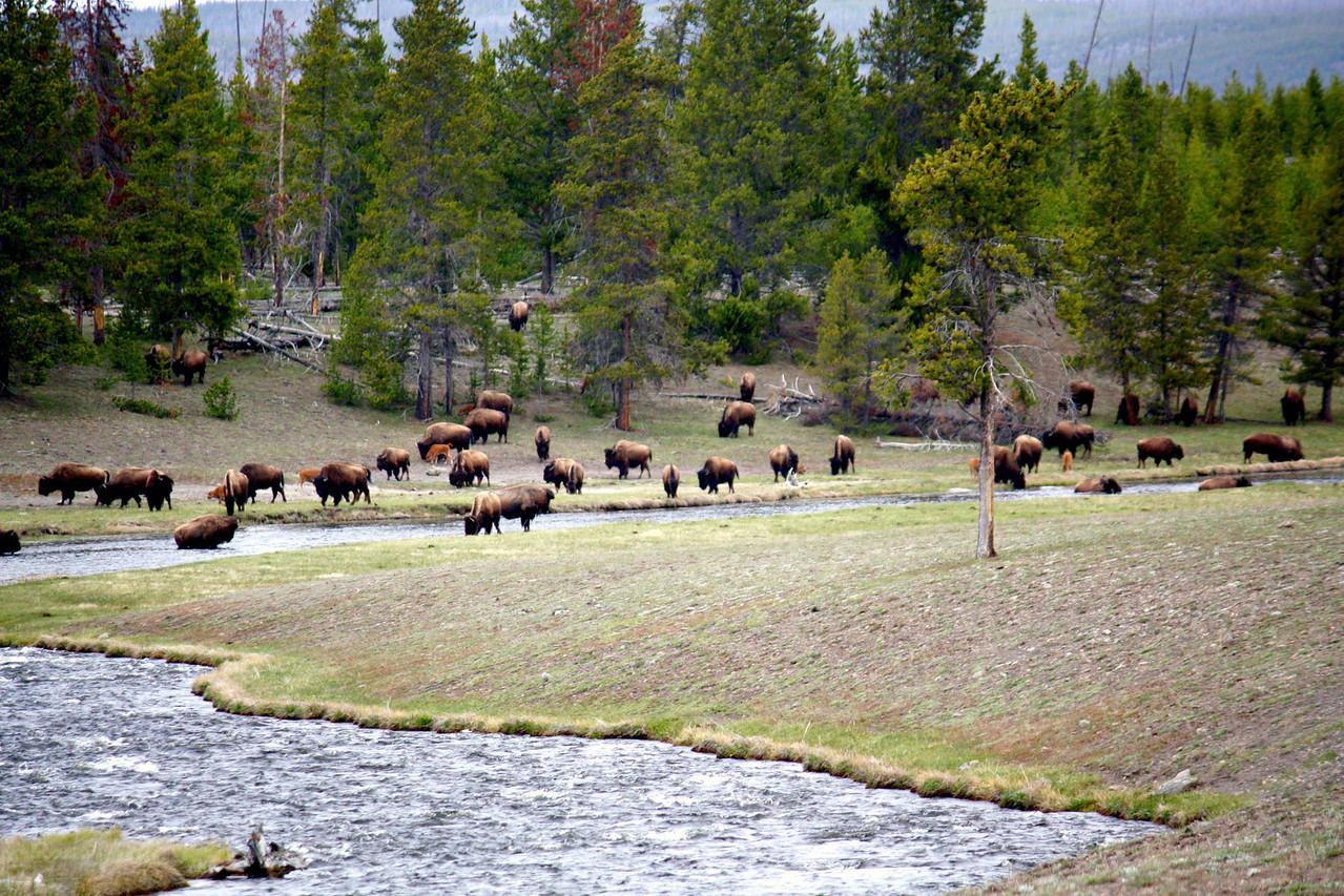Picnic Herd