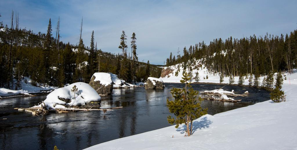 Yellowstone Landscape