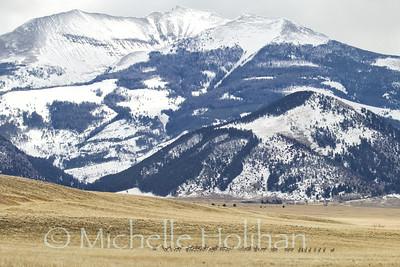 Pronghorns and the Madison Range