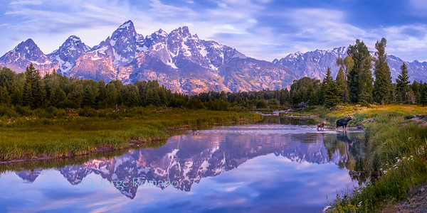 Grand Teton at Sunrise and Moose crossing the Snake River with her calf.
