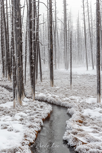 Dead Trees in Frost, By Andy Lee  2/1/18