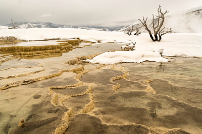 Canary Pools, Mammoth Hot Springs