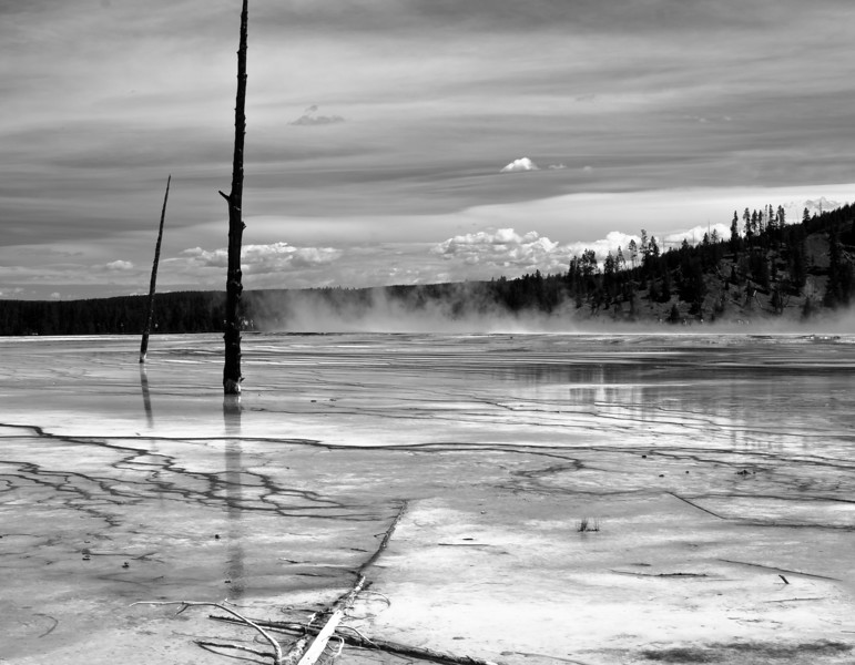 Dead trees in the wash area around Grand Prismatic Spring