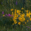 Wild Flowrs, Lamar Valley