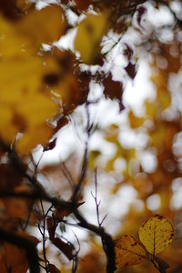 Efterår, Fall, Rold Skov, Denmark