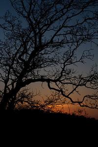 Solnedgang lige før løvspring, Skørping Holme, Denmark
