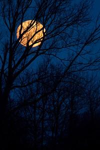 Januar -fuldmåne ved Tofte Sø, Lille Vildmose