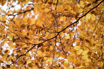 Efterår, Fall, Rold Skov, Himmerland, Denmark