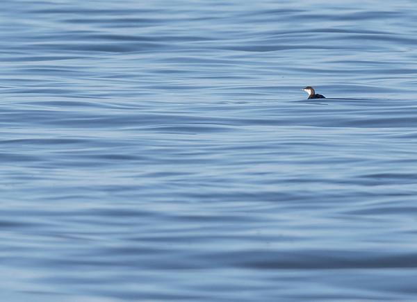 Diver on silky calm North Sea