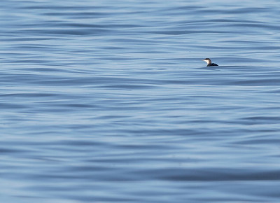 Diver on silky calm North Sea