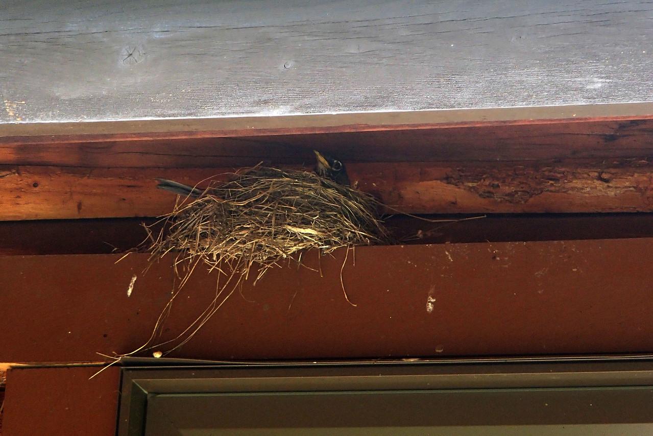 469 Birds Nest