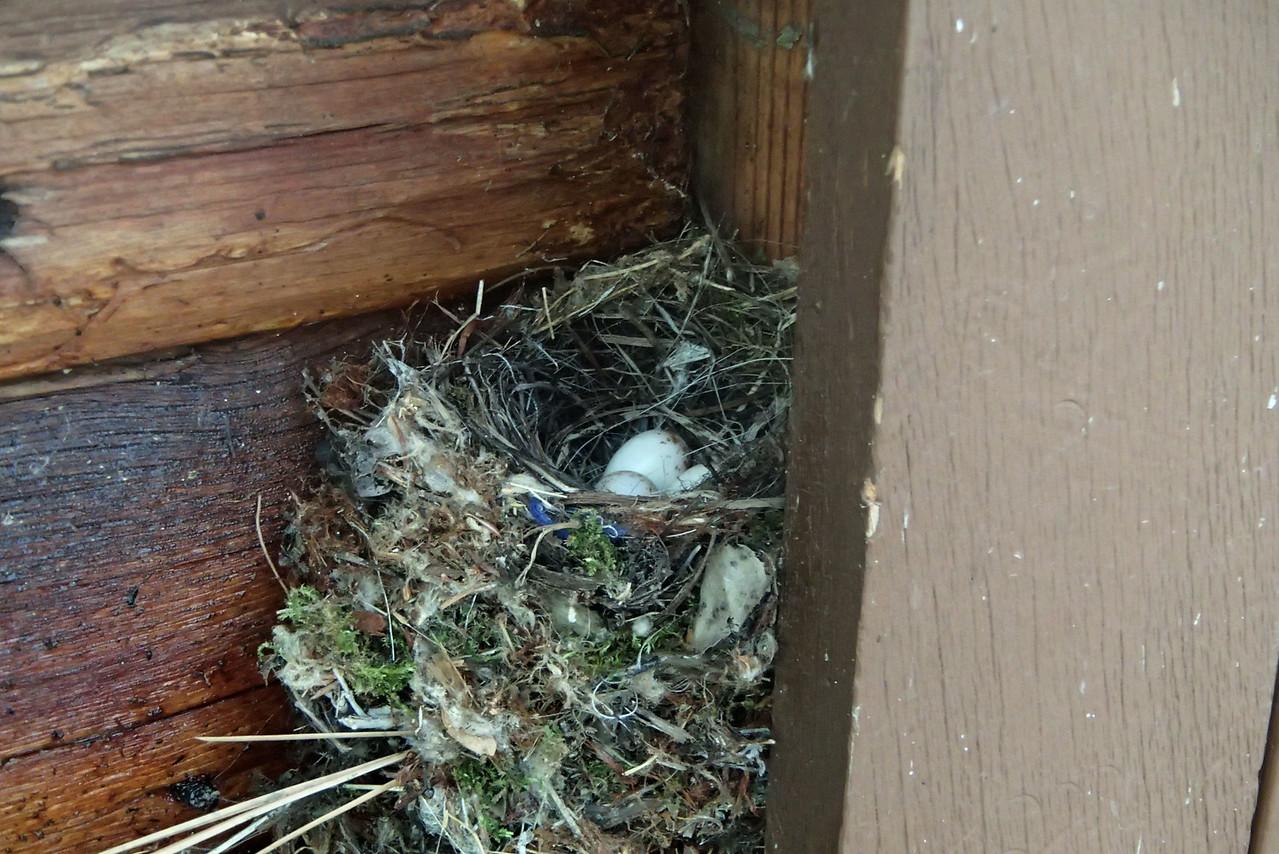 474 Birds nest