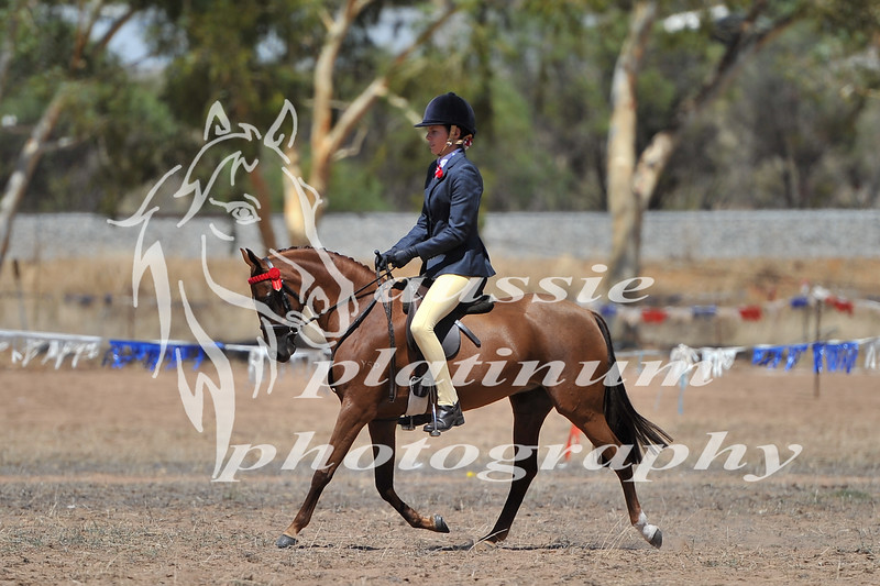 York Horsemans 20-2-591