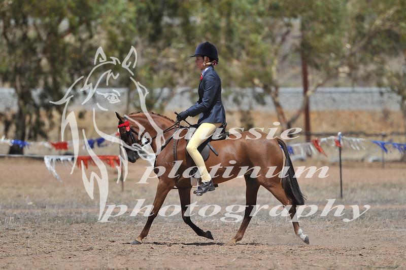 York Horsemans 20-2-589