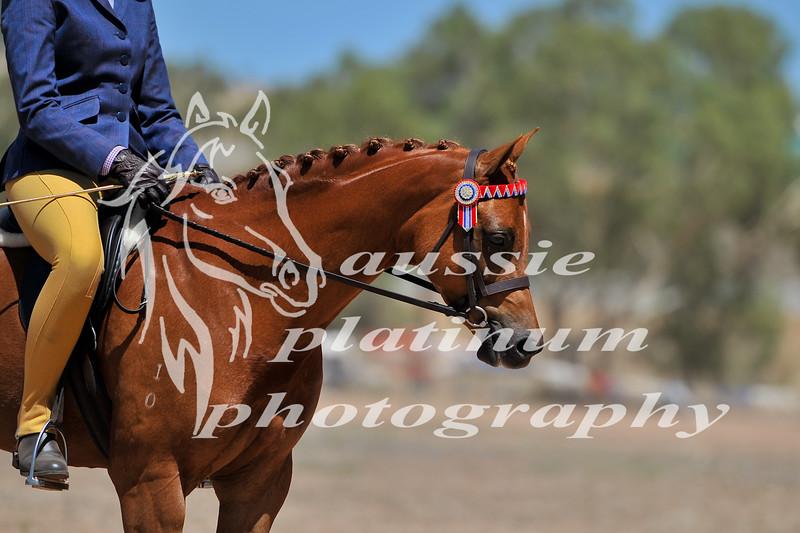 York Horsemans 20-2-606