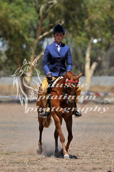 York Horsemans 20-2-602