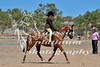 York Horsemans 20-2-610