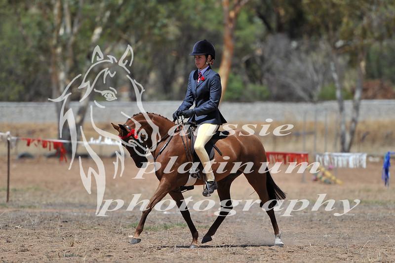 York Horsemans 20-2-593