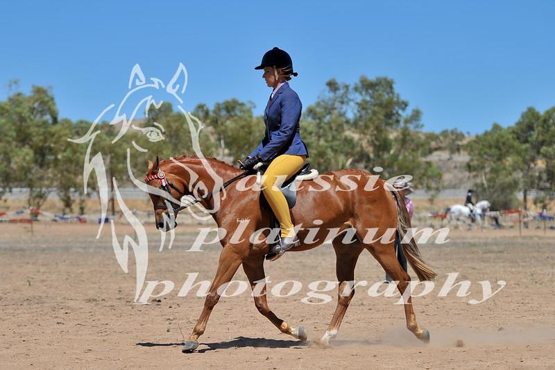 York Horsemans 20-2-605