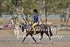 York Horsemans 20-2-615