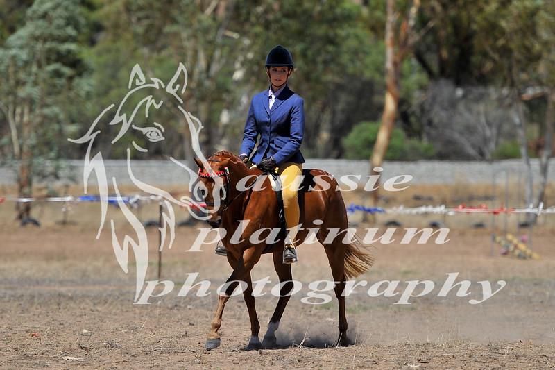 York Horsemans 20-2-598