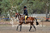 York Horsemans 20-2-625
