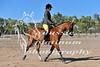 York Horsemans 20-2-11
