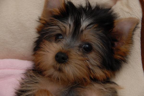 teddy 14 wks old