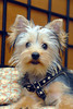 teddy 5 months old