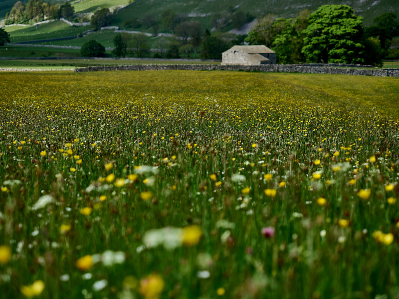 Littondale Meadows