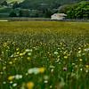 Littondale Meadows