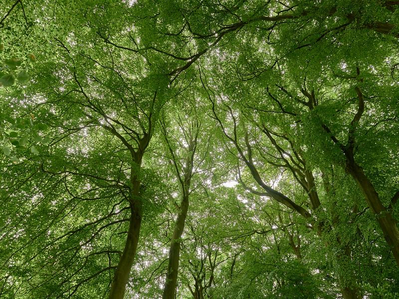 Tree canopy Strid Wood