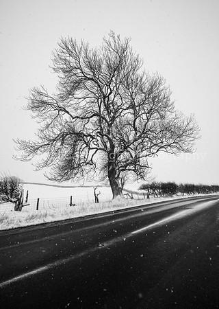 Winter Scene, Yorkshire Dales