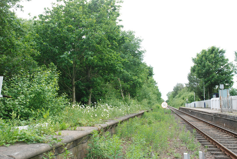 Shot taken from the Road crossing showing the out of use platform that <br /> <br /> like Snaith old platform is now buried under trees and bushes