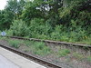 Pic by Liz <br /> <br /> Taken just on the platform looking across at the old abandonded platform