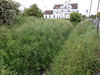 pic by Liz <br /> <br /> shot showing the over grown field behind the fence as you go down <br /> <br /> the exit ramp with the Jolly Miller pub in the background