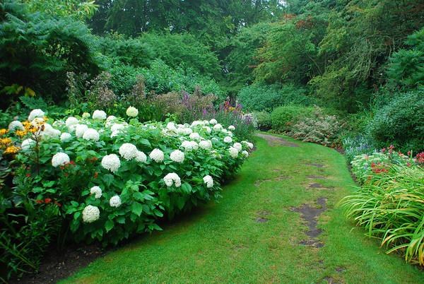 Lovely Hydrangea.