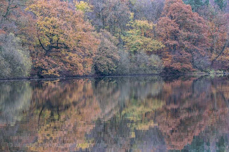 Eavestone Lake, 9 Nov 19-47.jpg
