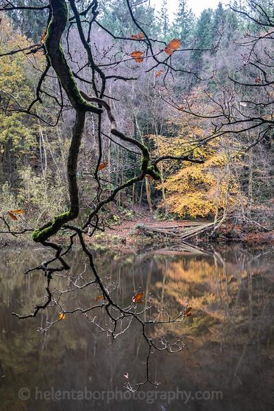 Eavestone Lake, 9 Nov 19-28.jpg