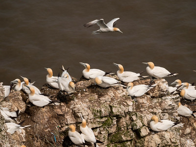 Bempton Bird Sanctuary