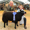 CSL 14 Reserve champ young handler Harvey Heath aged 7 from Derbyshire with his Blue Texel presented by steward Philip Hughes