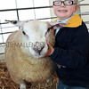 William Burnop aged 6 prepares his Beltex X sheep at Countryside Live, Harrogate