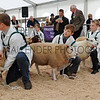 076 sheep young handler