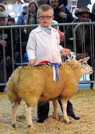 126 sheep young handler